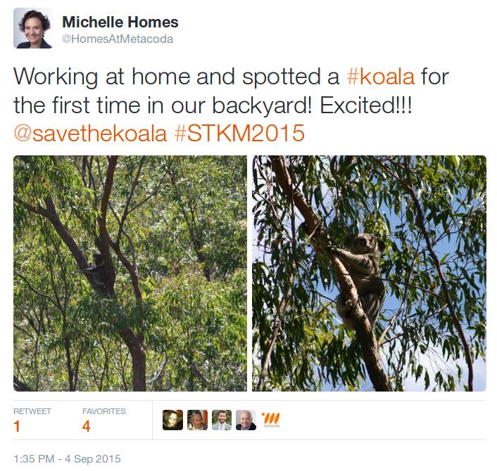 Wild Koala Visit - Tweet