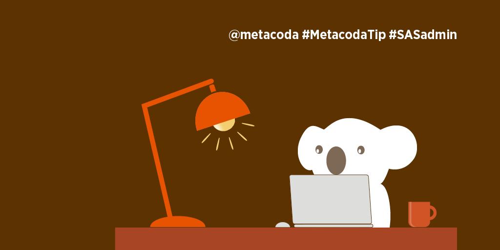 #MetacodaTip social - koala at desk