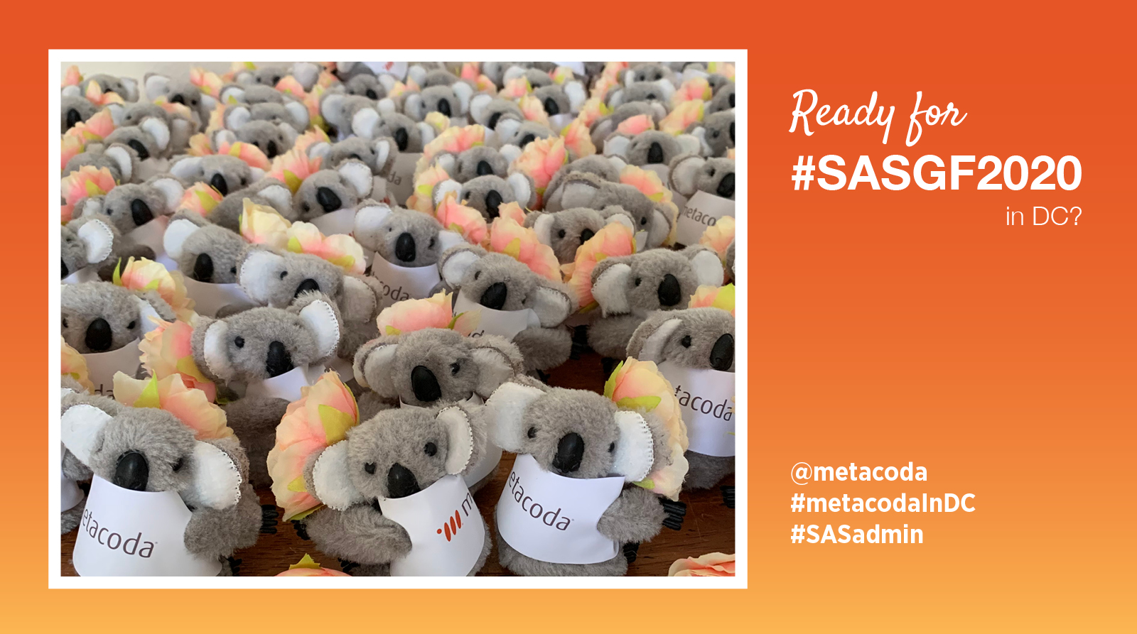 Metacoda koalas with cherry blossoms for SASGF 2020